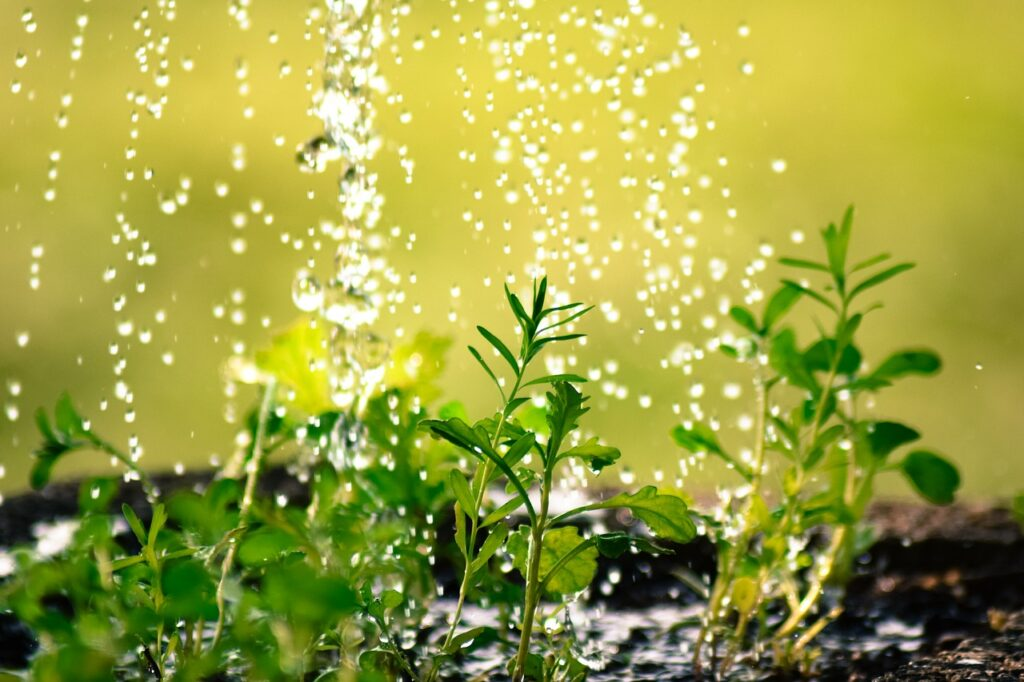 drop of water, water the plants, plug